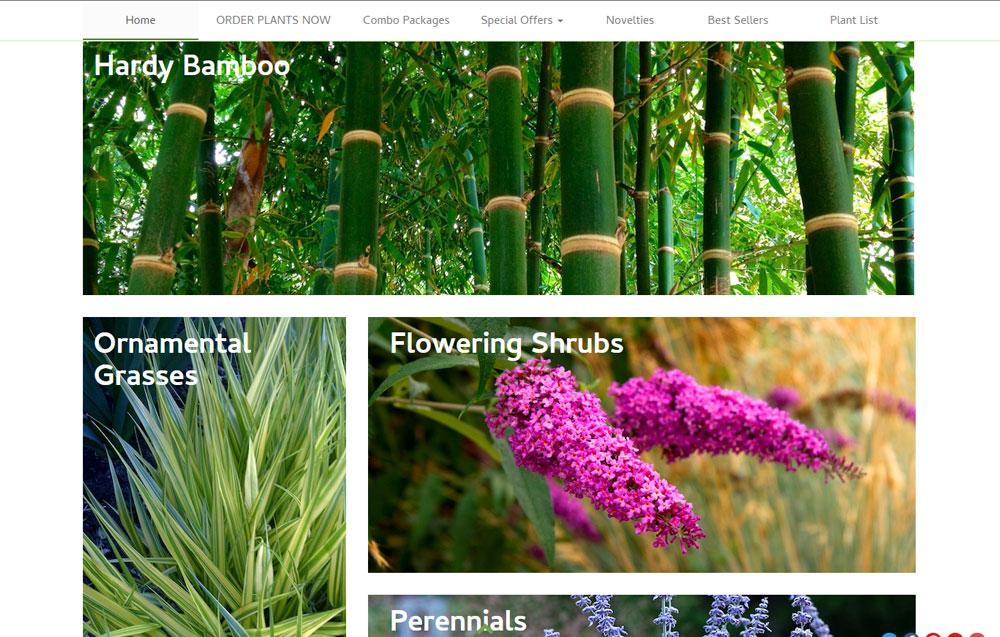 bambooplants3